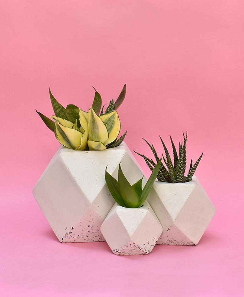 Cluster of Geometric Concrete Planter Polygon