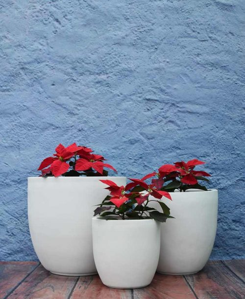 Cluster of Cup Shape Planters