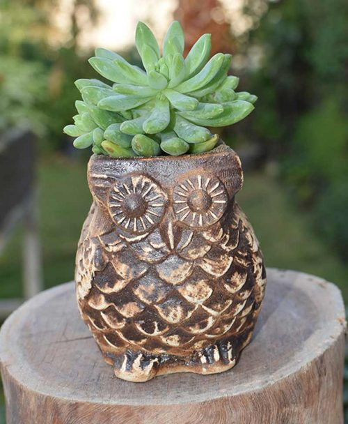 Ceramic Coffee Brown Owl with Succulents