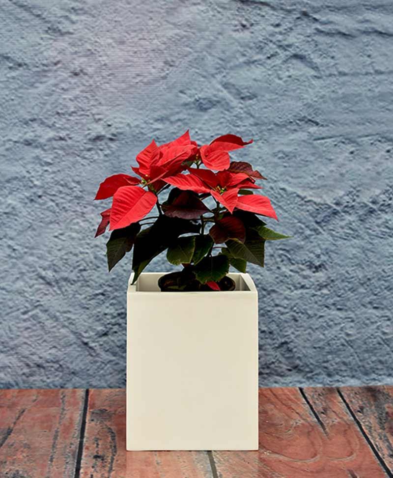 Compact Squarish Planter 12 inch