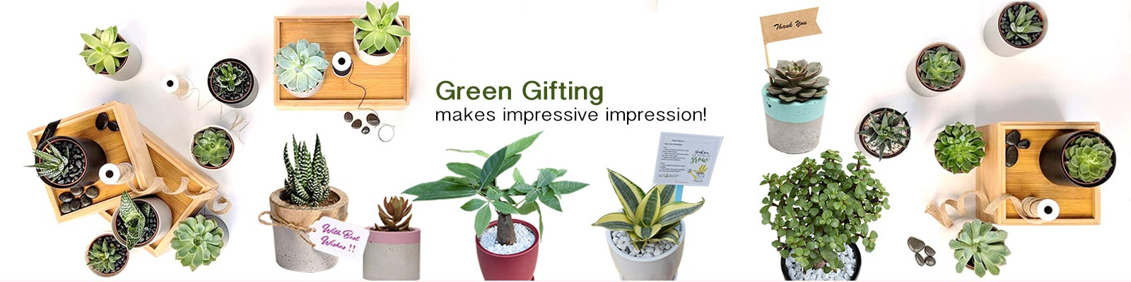 Corporate Green Gifting - Corporate Air Purifying Gift Plants Gurgaon, Noida, Delhi