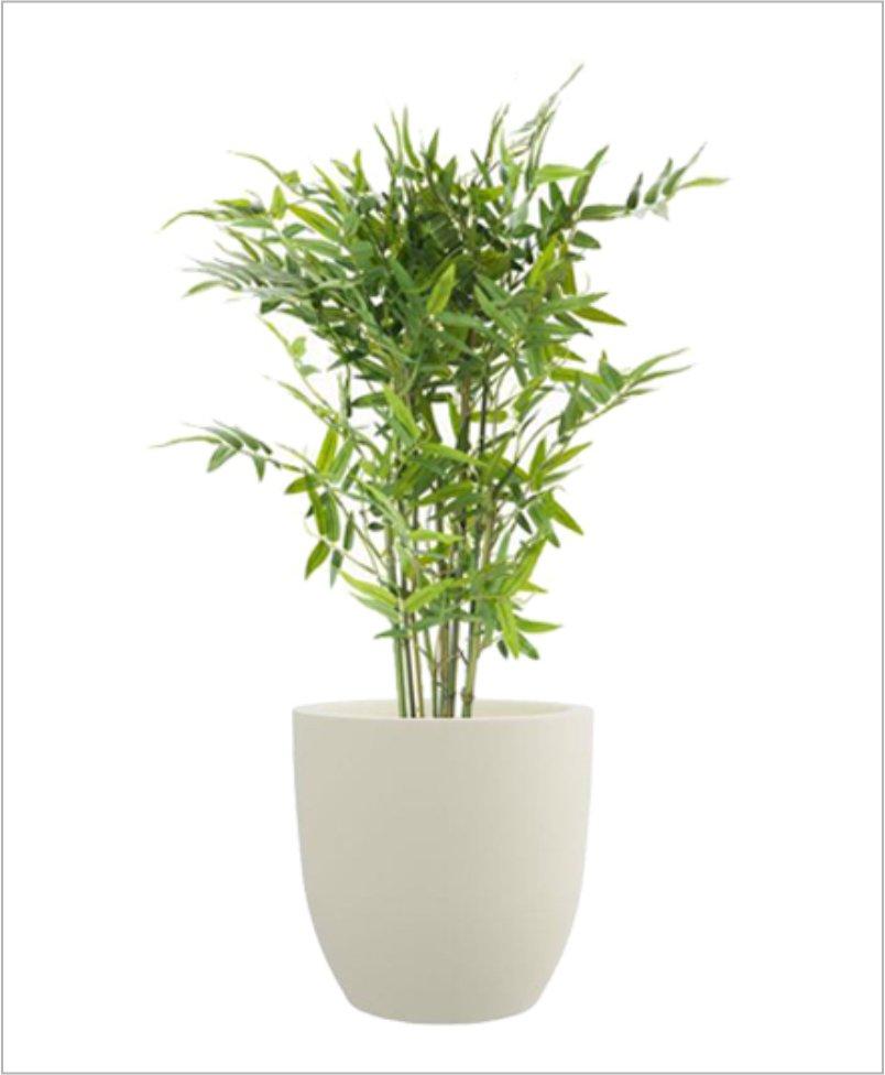 Cup Shape Fiber Planter 18 inch