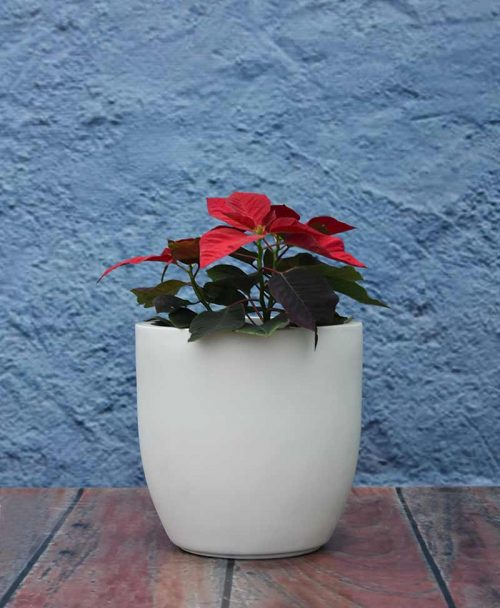 Cup Shape Planter 12 inch