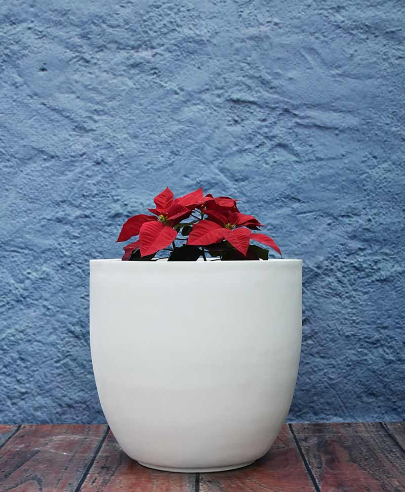 Cup Shape Planter 16 inch