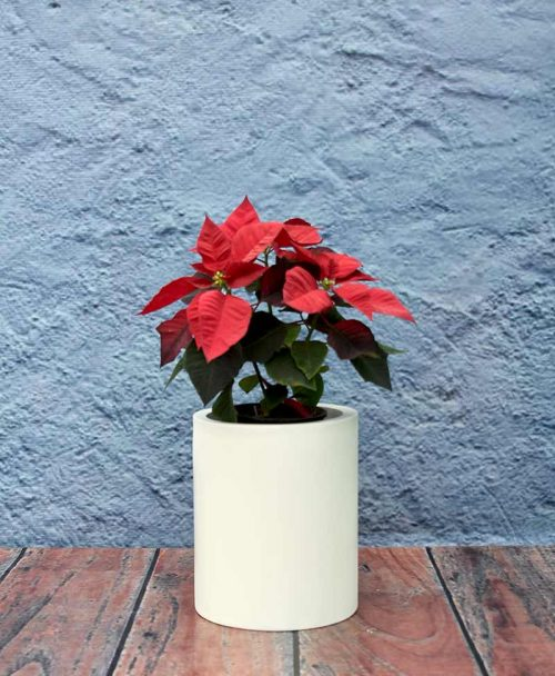Compact Cylindrical Planters 12 Inch