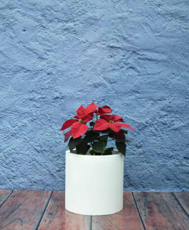 Geometric Shape Cylinder Planter 12 inch, Indoor – Outdoor Fiber Planter