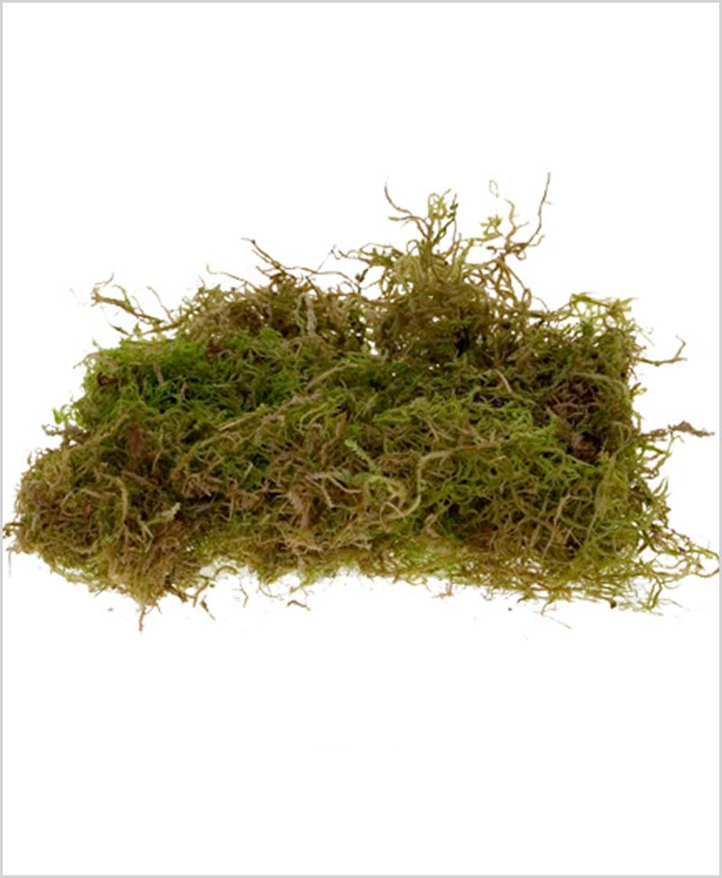 Natural Dried Moss Grass