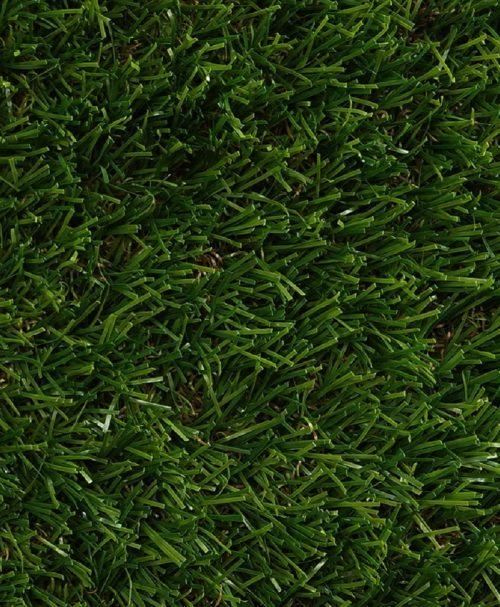 Korean carpet grass