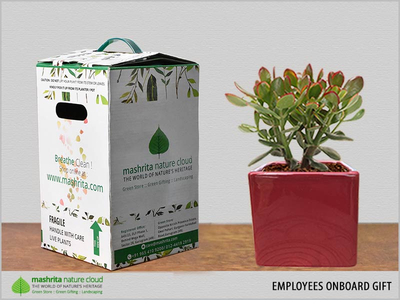 Employees Onboard Gift Plant