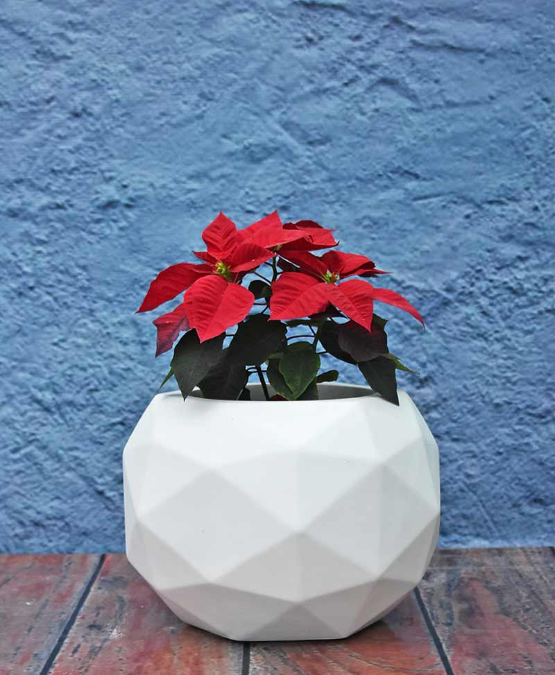 Geometric Shape Polyhedron Planter 18 inch