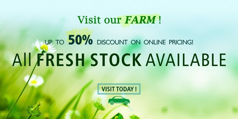 Visit Our Farm