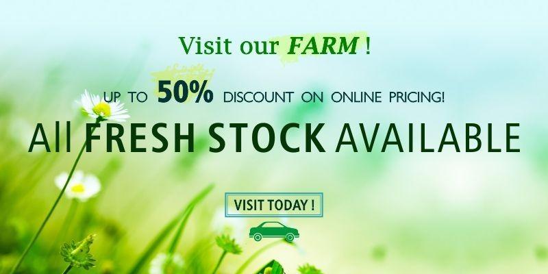 Visit Our Farm