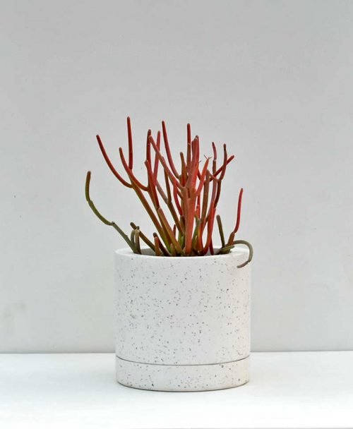 Geometric Concrete Planter Cylinder 6 inch