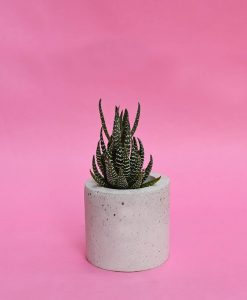 Geometric Concrete Planter Cylinder Mini 1