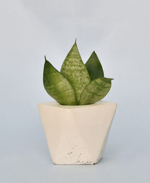 Geometric Concrete Planter Diamond