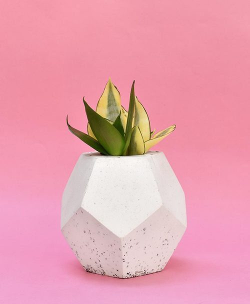 Geometric Concrete Planter Dodecahedron Large