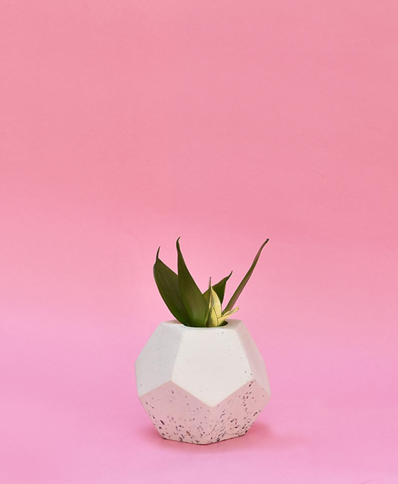 Geometric Concrete Planter Dodecahedron Mini