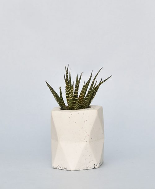 Geometric Concrete Planter Hexagon 1