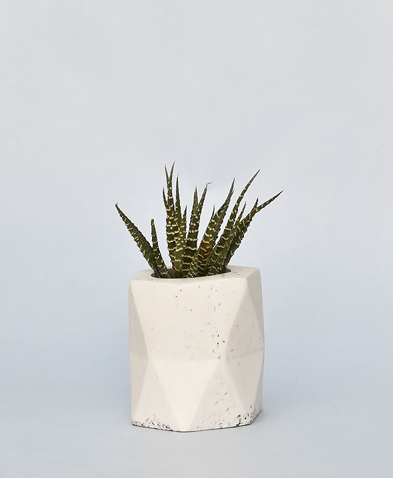 Geometric Concrete Planter Hexagon