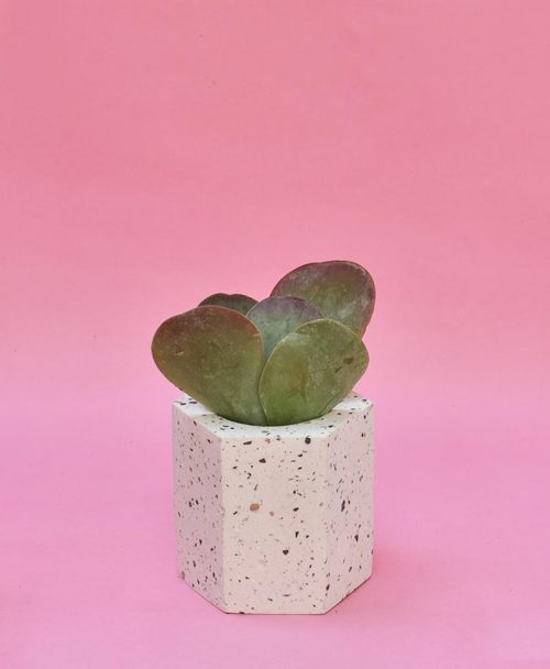 Geometric Concrete Planter Hexagon Straight