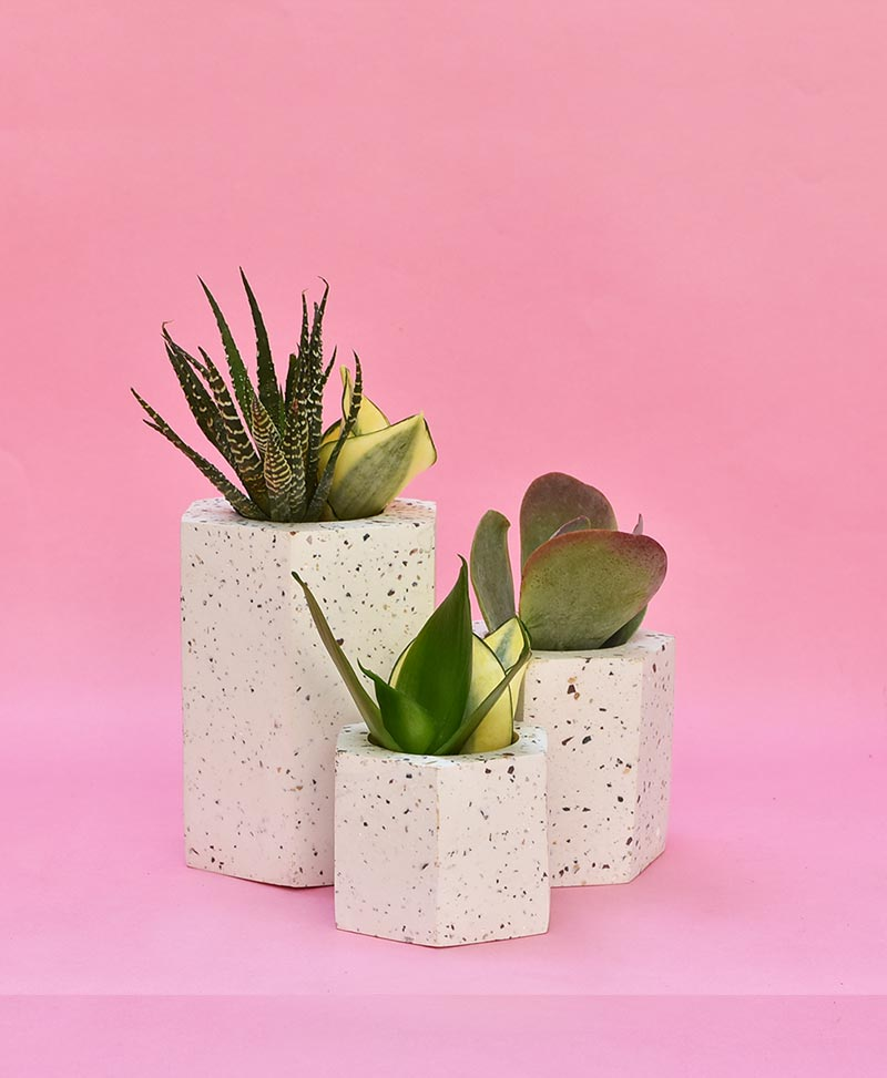 Cluster of Geometric Concrete Planter Hexagon Straight
