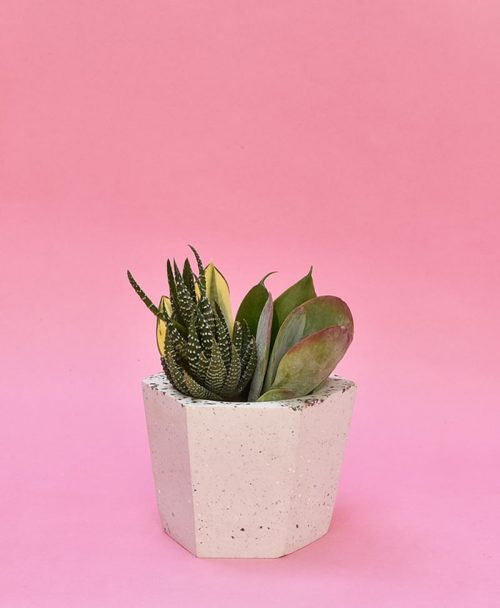 Geometric Concrete Planter Hexagon Tapered