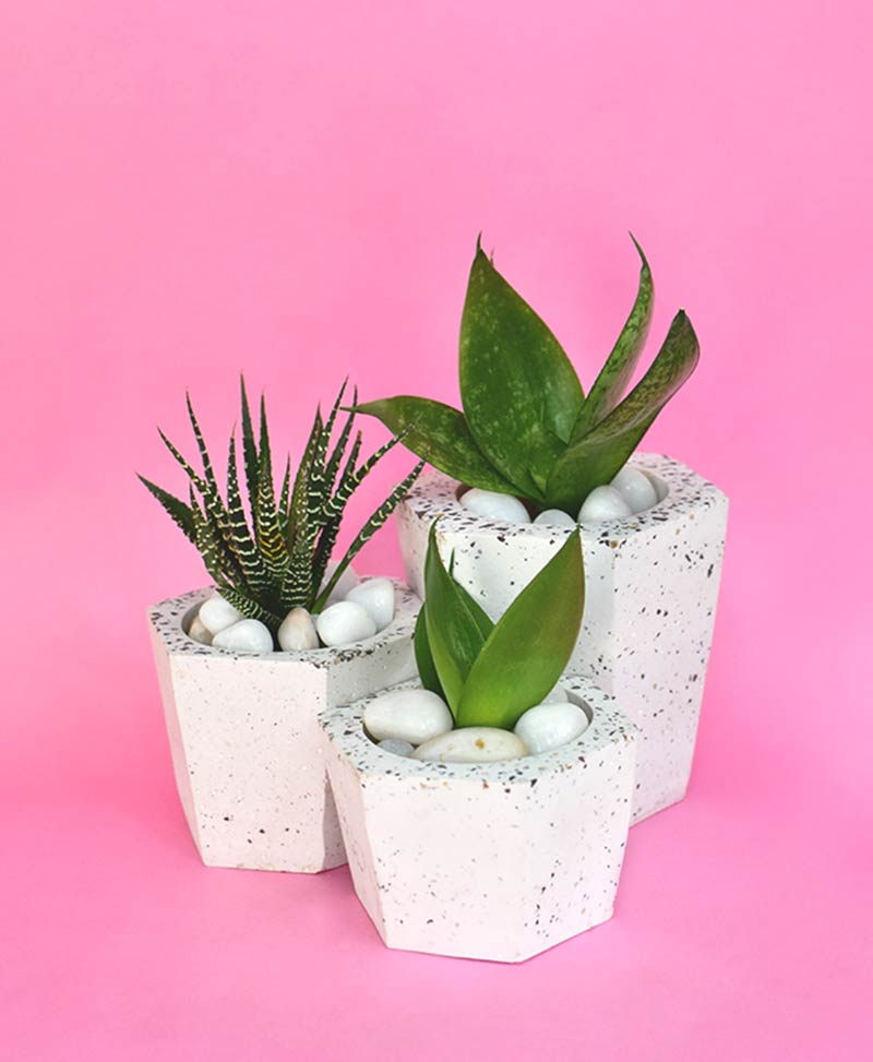 Cluster of Geometric Concrete Planter Hexagon Tapered