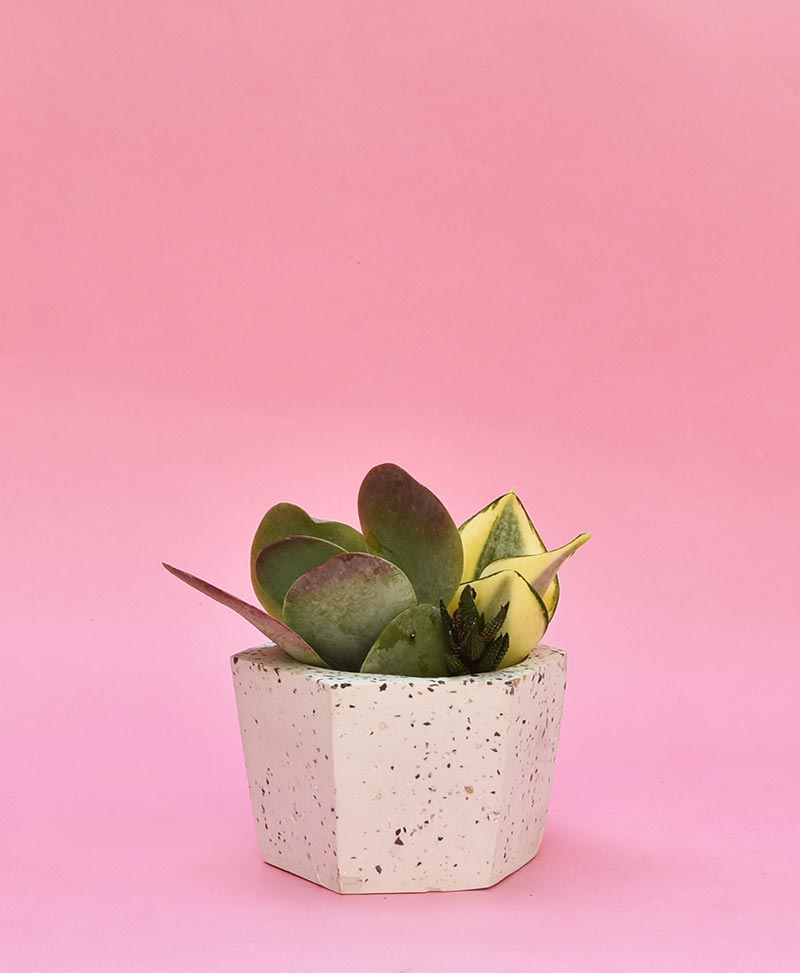 Geometric Concrete Planter Hexagon Tapered Mini