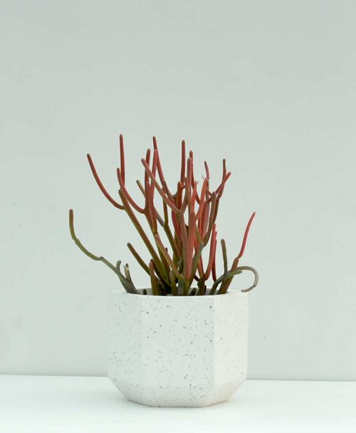 Geometric Concrete Planter Pentagon 4 inch