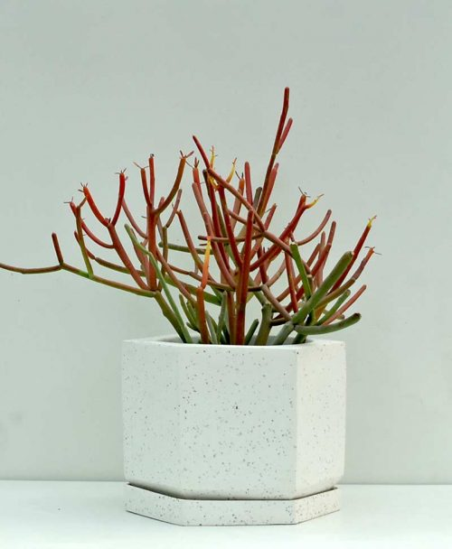 Geometric Concrete Planter Pentagon 6 inch