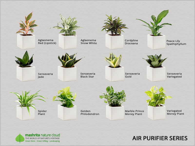 Gift Plant Airpurifier Series