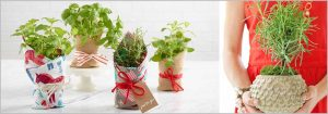 Gift a Plant, Gift a Life
