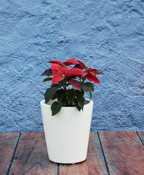 Glass Shape Fiber Planter 12 inch