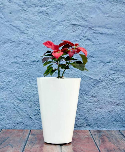 Glass Shape Fiber Planter 18 inch