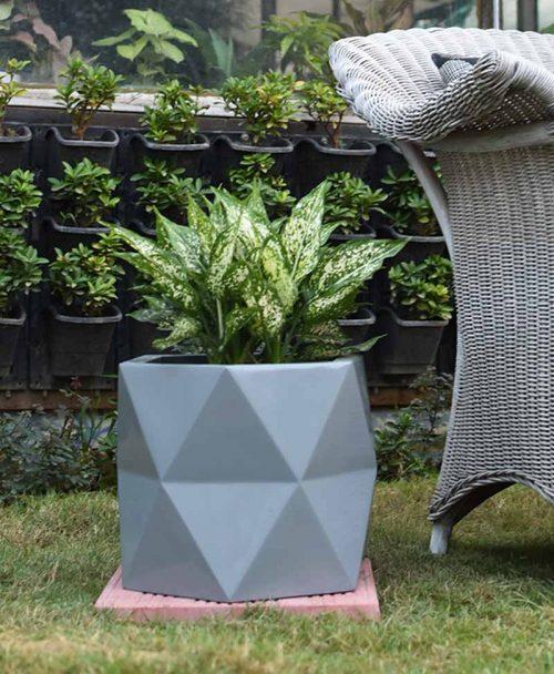 Fiber Glass Hexagon Shape Gray Planter with Aglaonema Snow White
