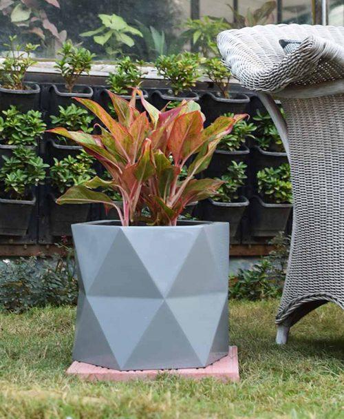 Fiber Glass Hexagon Shape Gray Planter with Aglaonema Red