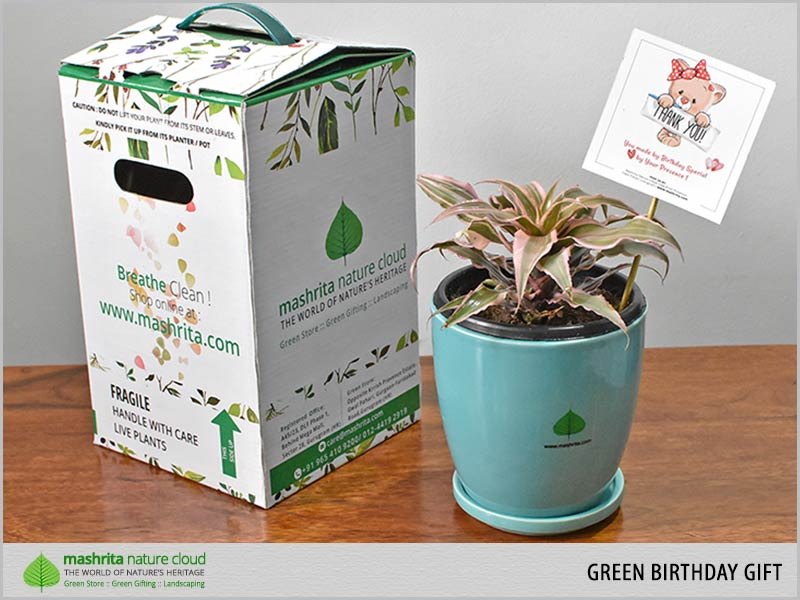 Green Birthday Gift Plants India