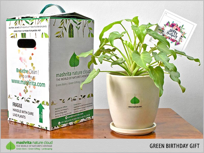 Green Birthday Gift Gurgaon