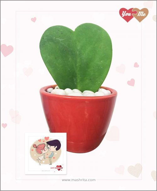 Hoya Sweet Heart Plant in Red Oval Pot