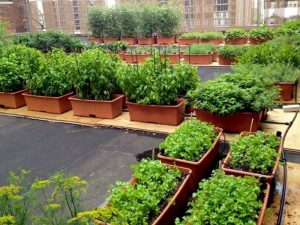 Green Roof India