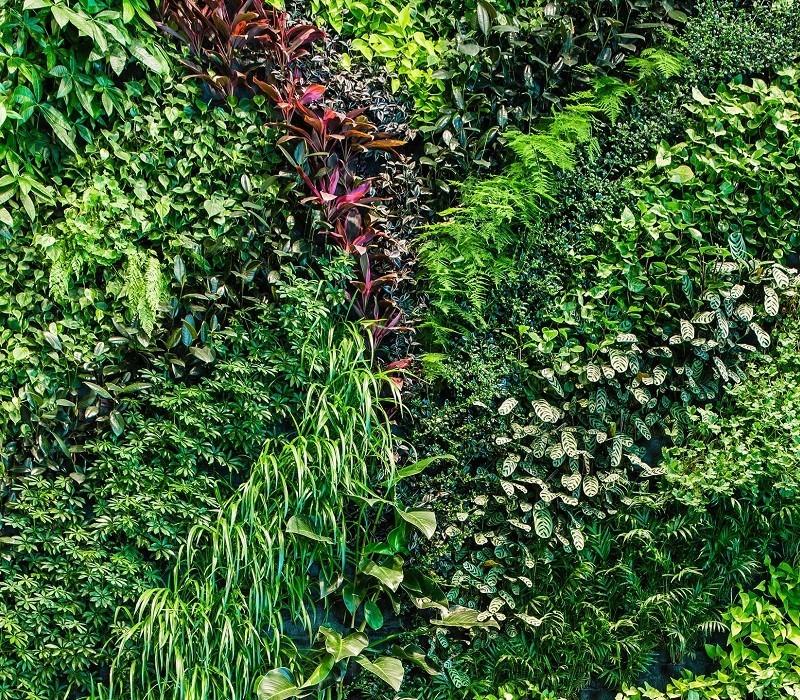Green Walls India