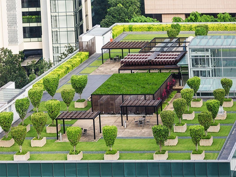 Living Roof India