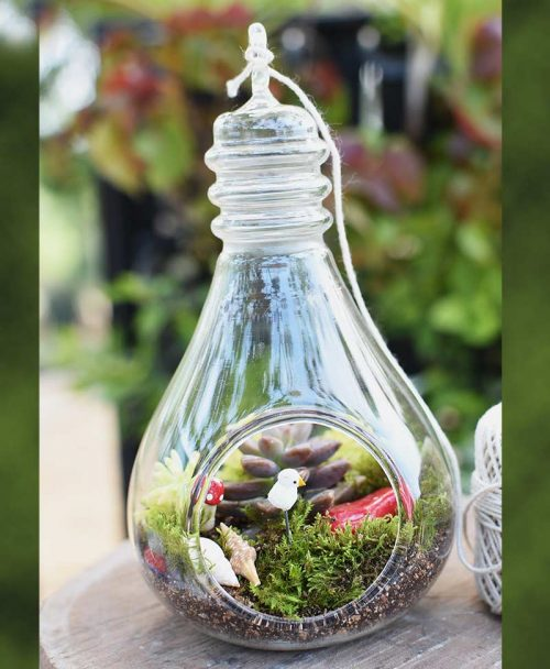 Hanging Bulb Type Terrarium with Echeveria and Deco Mates