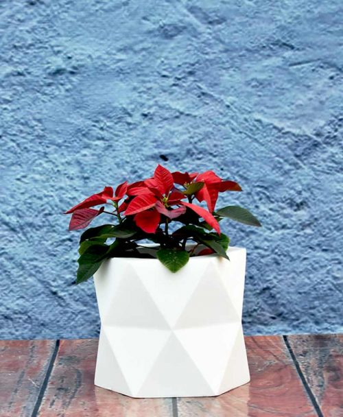 Geometric Shape Hexagon Planter 12 inch