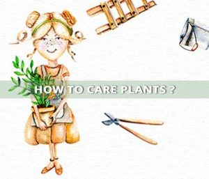 How to care plants?