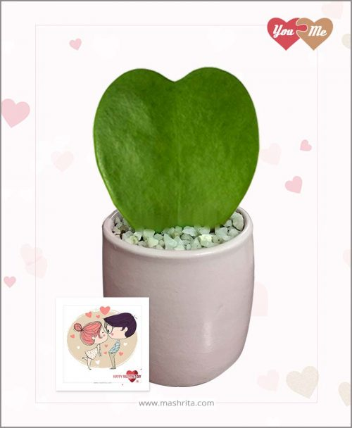 Hoya Sweet Heart Plant in Pink Valentine Pot