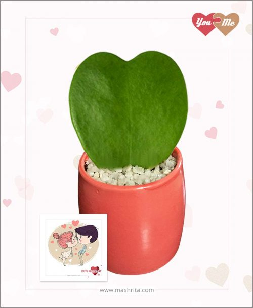 Hoya Sweet Heart Plant in Red Valentine Pot