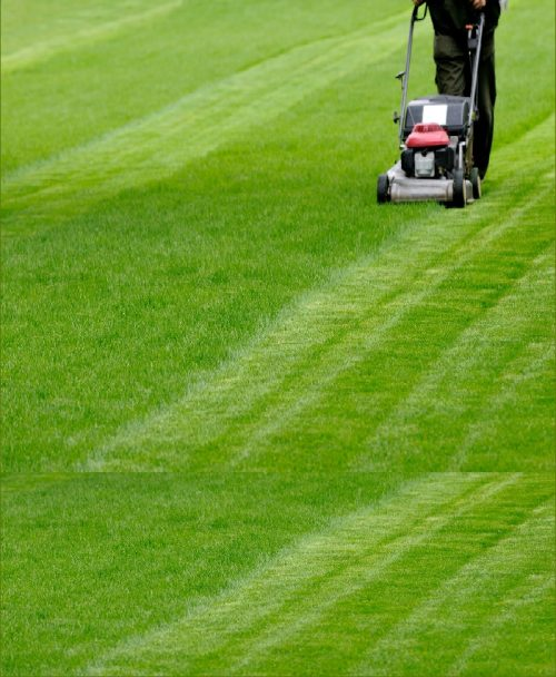 Lawn Grass Maintenance