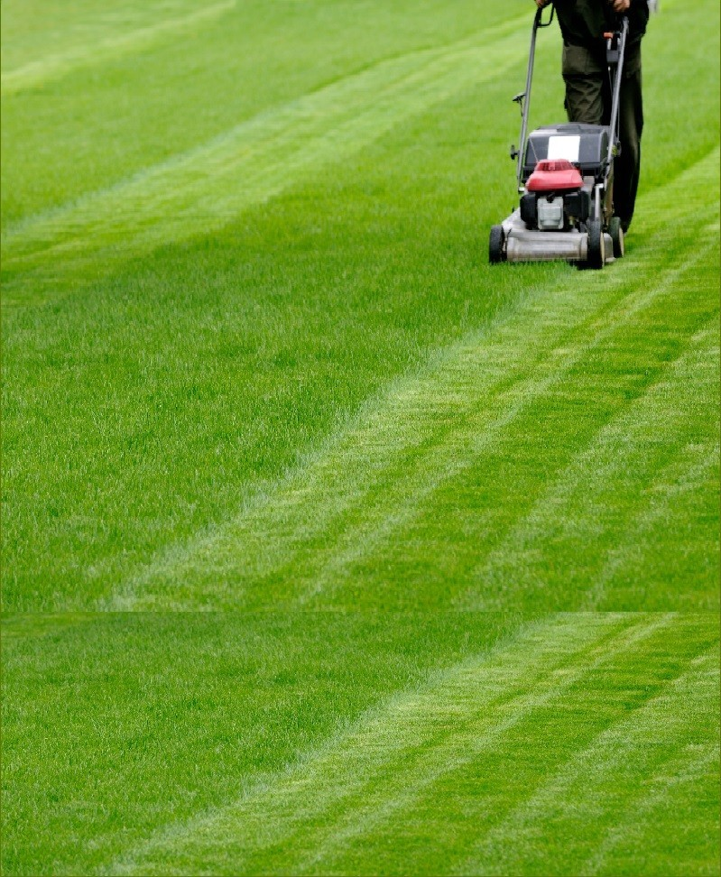 Natural Lawn Grass Maintenance
