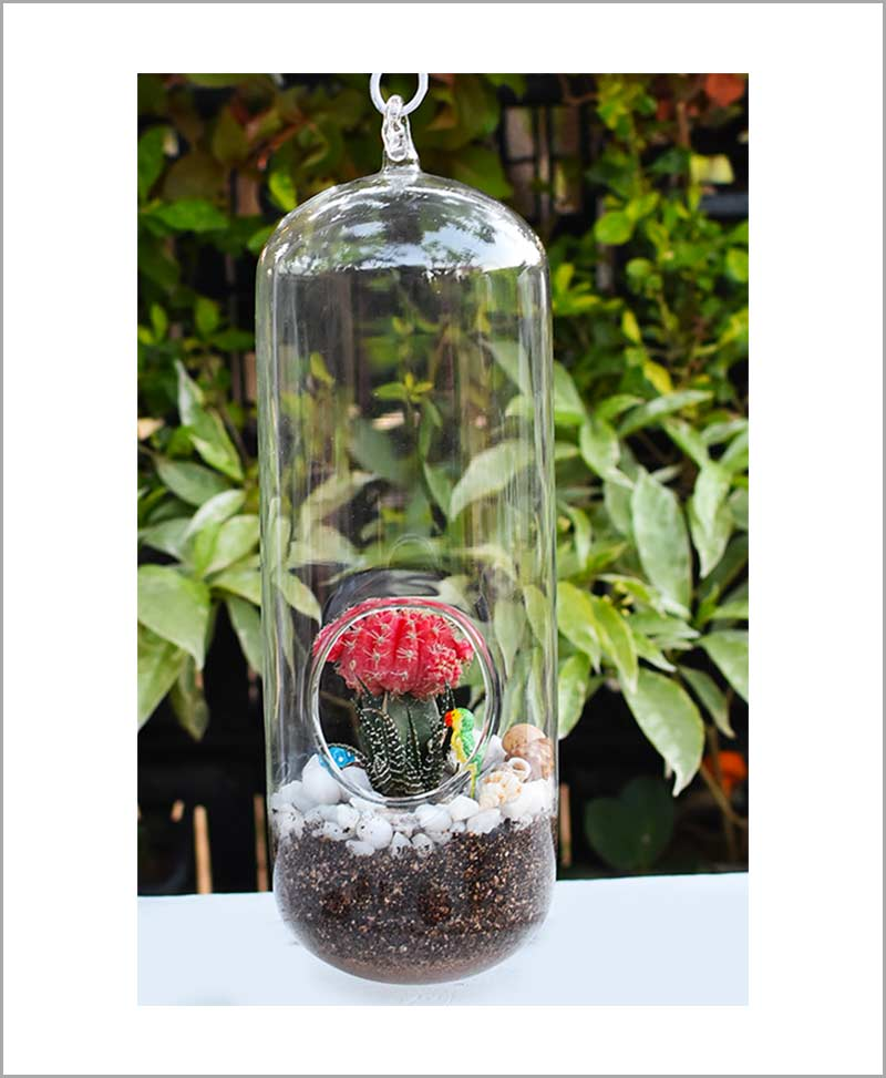 Hanging Long Capsule Type Terrarium with Grafted Cactus and Deco Mates